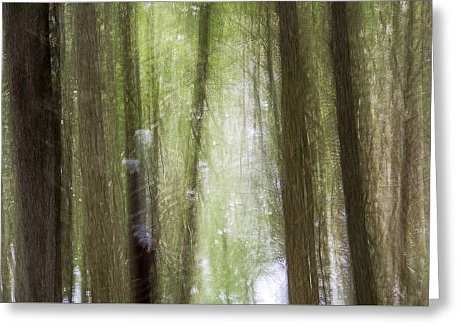 Mysterious Forest Rilke 1 Greeting Card by Scott Leslie