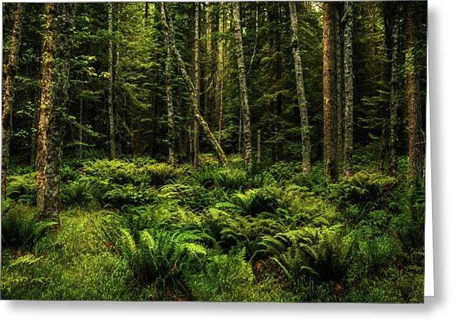 Mysterious Forest Greeting Card by TL Mair