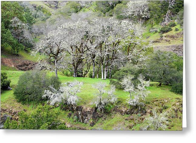 Mysterious Landscape In Sonoma County Greeting Card