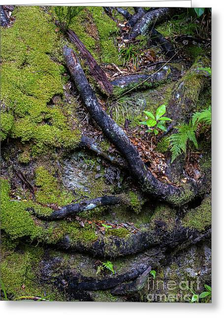 Mysterious Looking Tree Roots In The Ground Covered By Moss, Closeup, Abel Tasman National Park Greeting Card by Anna Soelberg
