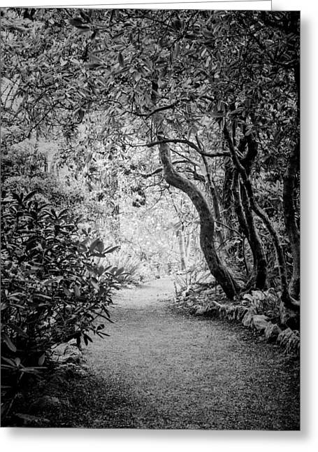 Mysterious Pathway Greeting Card