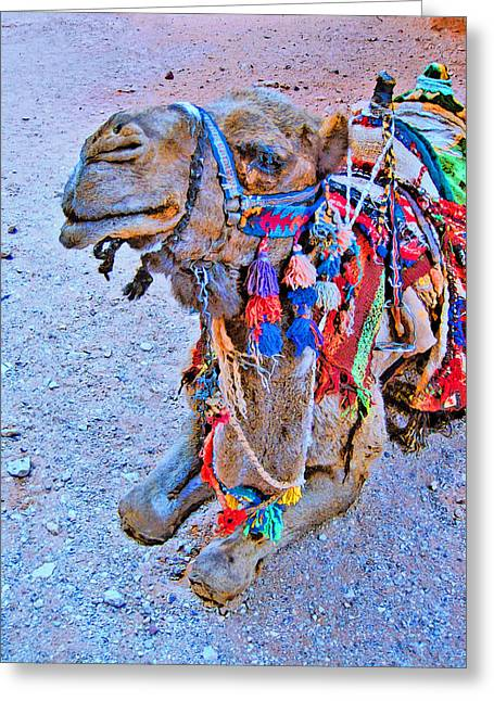 Mysterious Peter. Resting Camel. Greeting Card by Andy Za