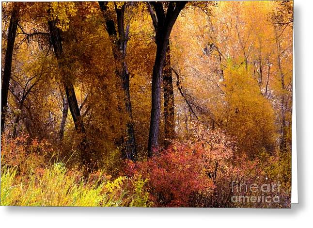 Mystery In Fall Folage Greeting Card by Annie Gibbons
