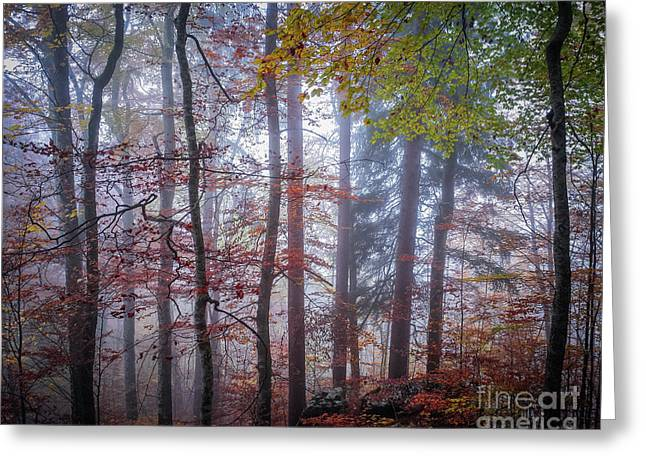 Greeting Card featuring the photograph Mystery In Fog by Elena Elisseeva