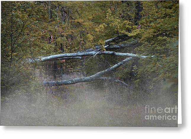 Greeting Card featuring the photograph Mystery In The Fall by Skip Willits