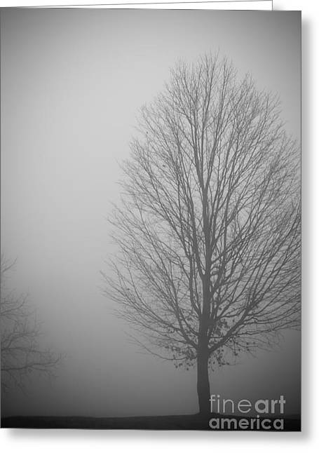 Mystery Morning - Monochrome Greeting Card by Claudia M Photography