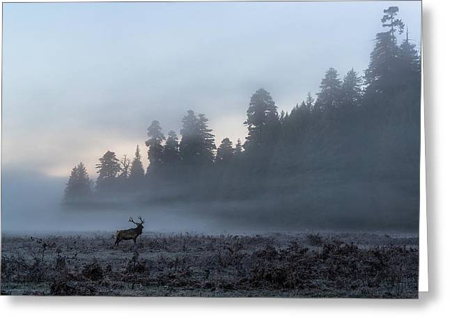 Mystic Elk Greeting Card