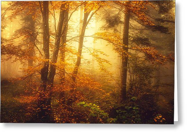 Mystic Fog Greeting Card