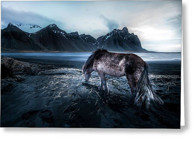 Mystic Icelandic Horse Greeting Card by Larry Marshall