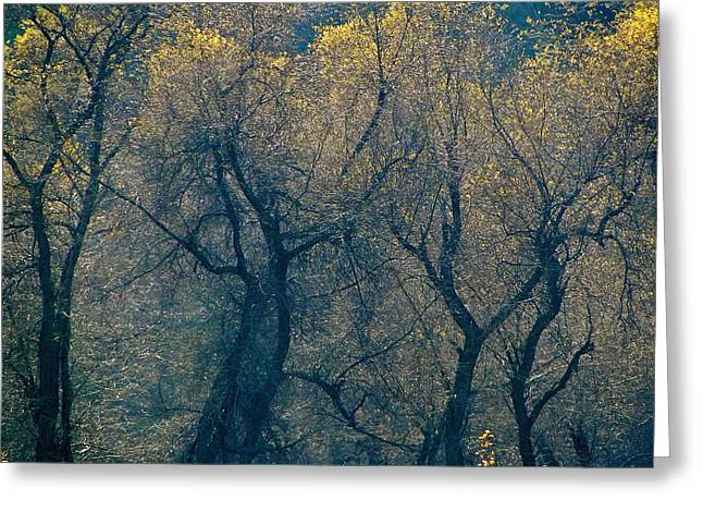 Tree. Sycamore Greeting Cards - Mystic Trees Greeting Card by Liz Vernand