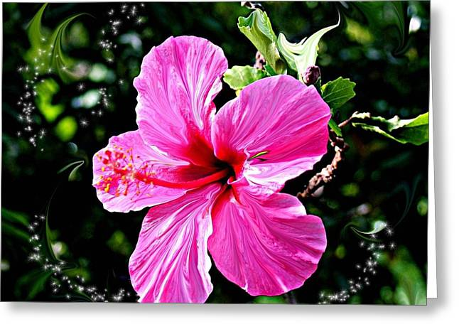 Greeting Card featuring the photograph Mystical Bloom by The Art of Alice Terrill