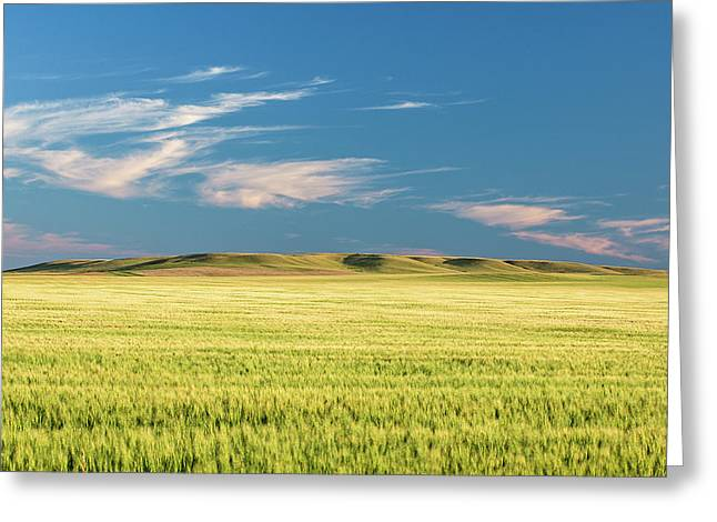 Mystical Field Greeting Card by Todd Klassy