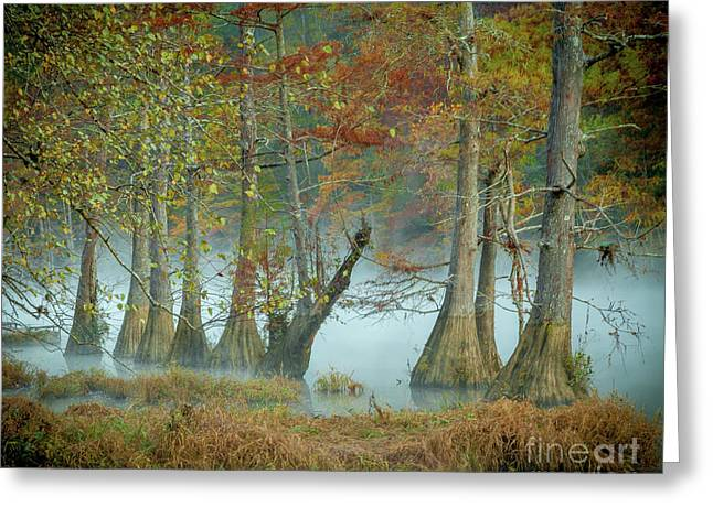 Greeting Card featuring the photograph Mystical Mist by Iris Greenwell