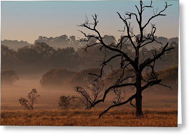 Mystical Morning Greeting Card by Heather Thorning