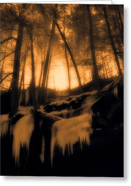 Mystical Morning Light In The Forest Greeting Card by Dan Sproul