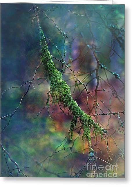 Mystical Moss - Series 1/2 Greeting Card