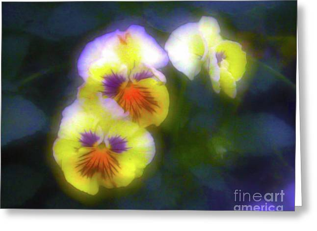 Mystical Pansies Greeting Card