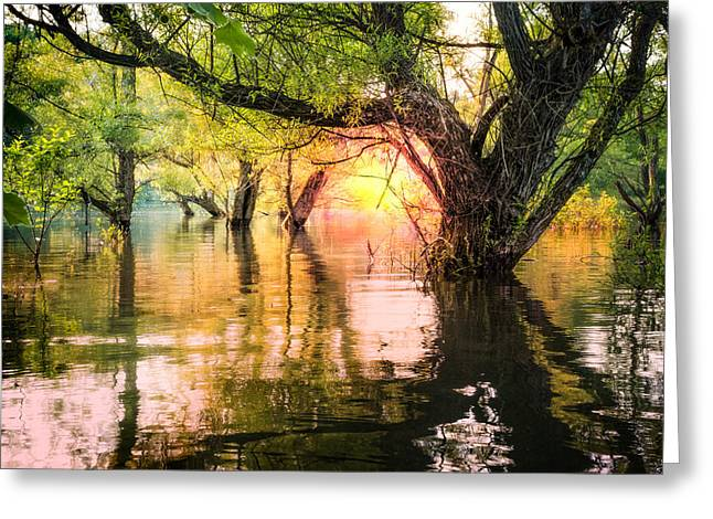 Mystical River Greeting Card by Debra and Dave Vanderlaan