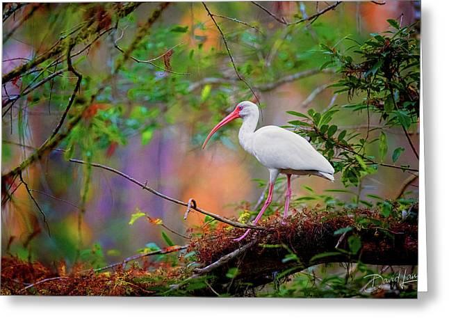 Mystical White Ibis Greeting Card