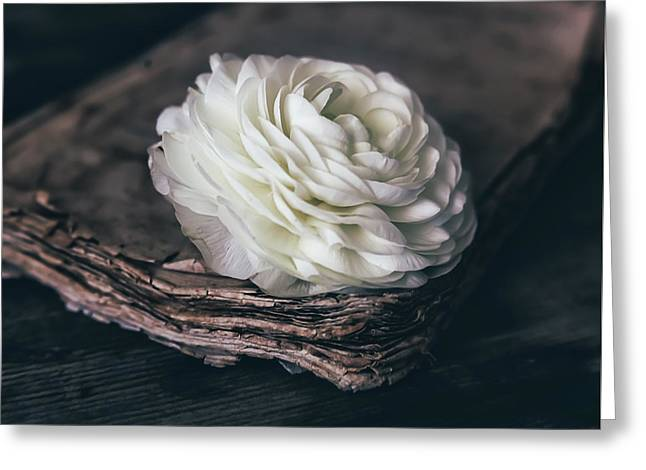 Greeting Card featuring the photograph Mystique by Kim Hojnacki