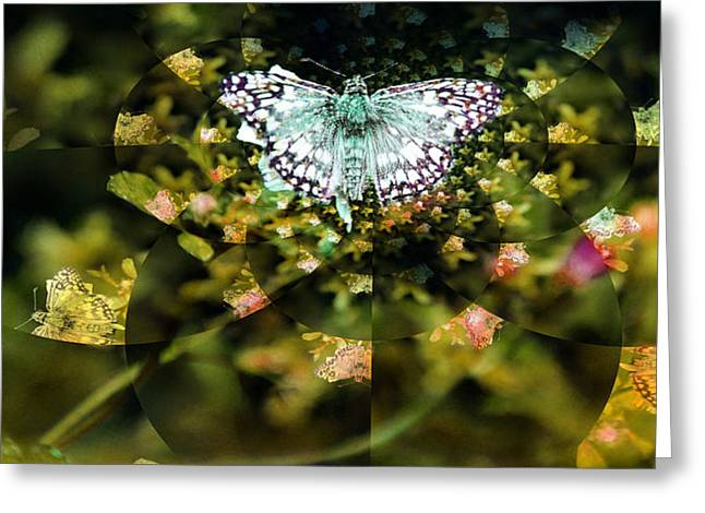 Mythical Butterfly  Greeting Card by Rose  Hill