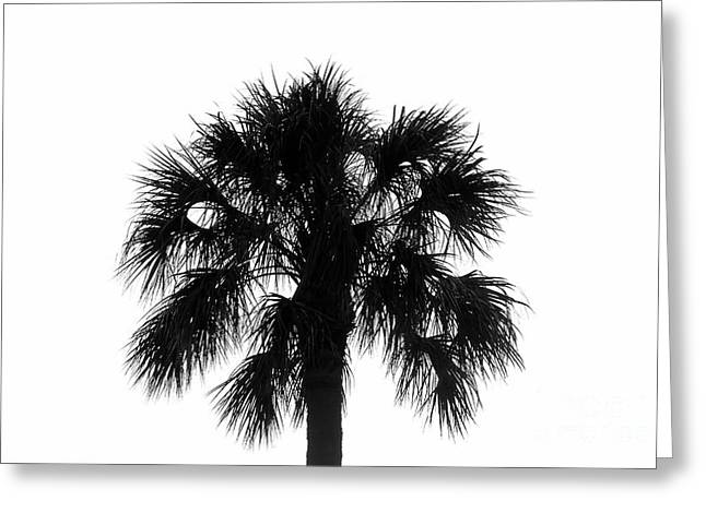 Naked Palm Greeting Card by David Lee Thompson