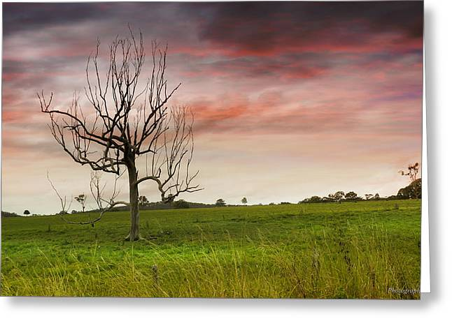 Naked Tree 01 Greeting Card by Kevin Chippindall