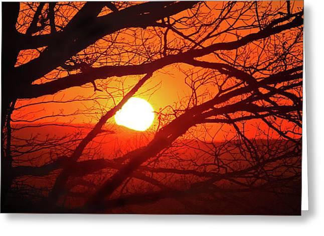 Naked Tree At Sunset, Smith Mountain Lake, Va. Greeting Card