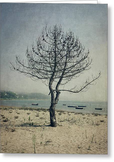 Greeting Card featuring the photograph Naked Tree by Marco Oliveira