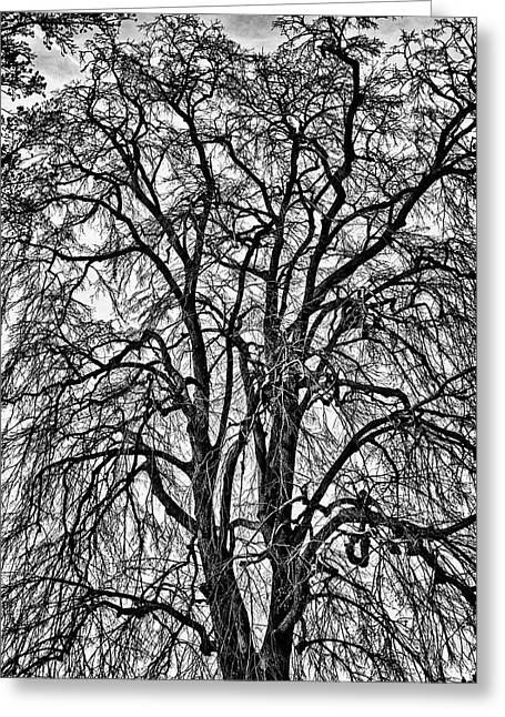 Naked Tree On Capitol Hill Greeting Card