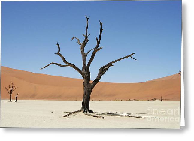 Namibia Desert Greeting Card by Nichola Denny