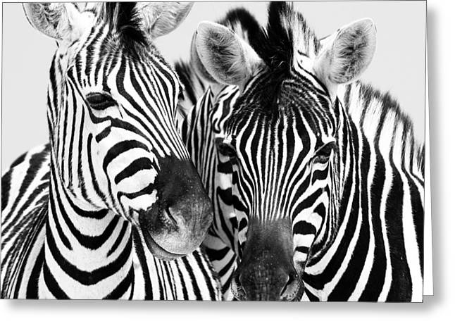 Namibia Zebras Iv Greeting Card by Nina Papiorek