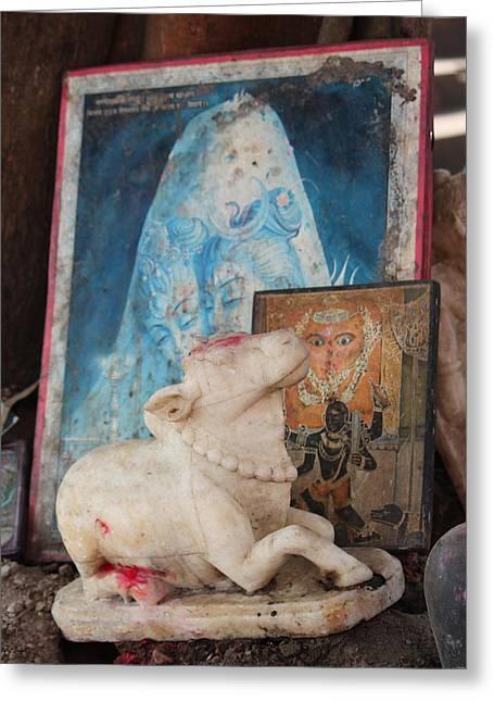 Nandi, Haridwar Greeting Card by Jennifer Mazzucco