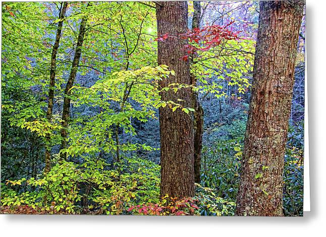 Nantahala Greeting Card
