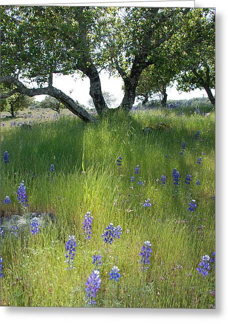 Dallas Hyatt Greeting Cards - Napa Hills Meadow Greeting Card by Dallas Hyatt