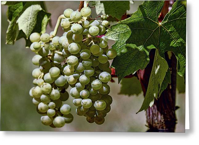Napa Valley Grapes Greeting Card