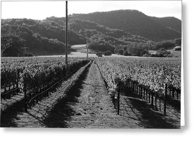 Napa Valley Vineyard .  Black And White . 7d9020 Greeting Card