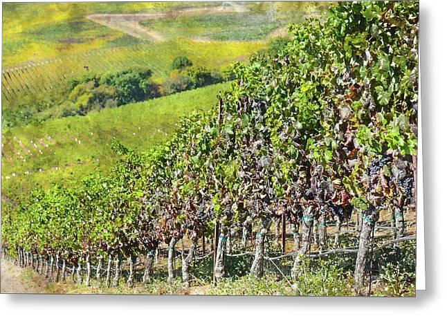 Napa Valley Vineyard In California Greeting Card by Brandon Bourdages