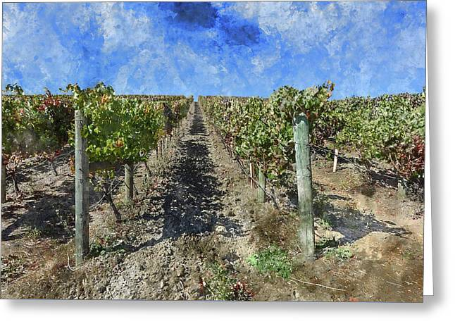 Napa Valley Vineyard - Rows Of Grapes Greeting Card by Brandon Bourdages