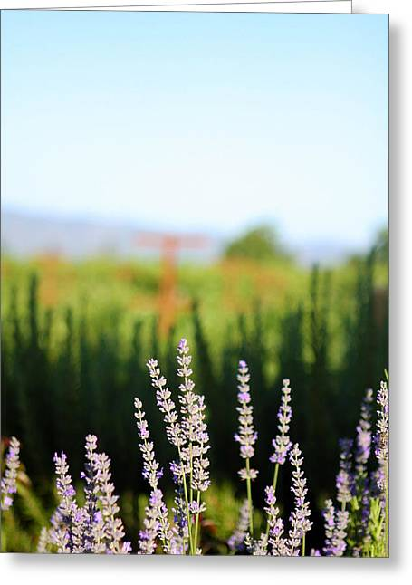 Napa View Greeting Card by Ty Helbach