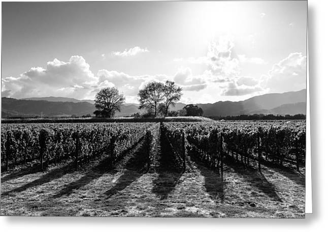 Napa Vineyard B/w Greeting Card