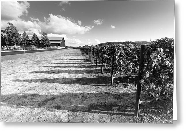 Napa Winery Rows Greeting Card by Paul Scolieri
