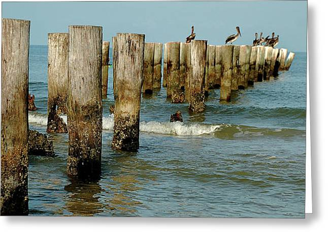 Naples Pier And Pelicans Greeting Card