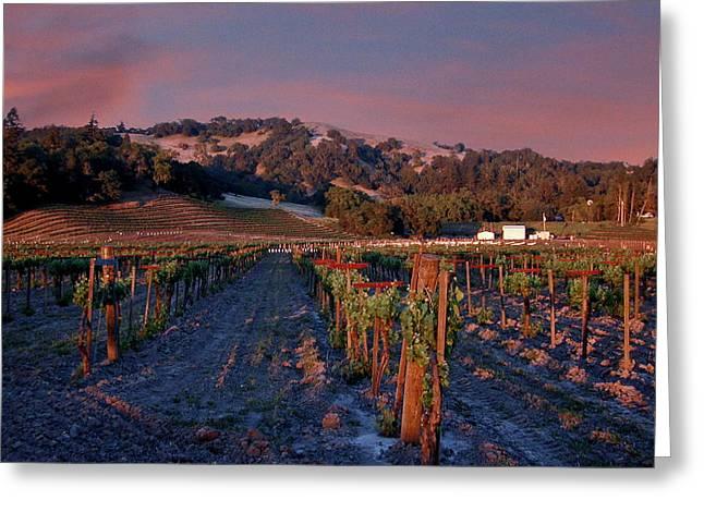 Nappa Valley Vineyard At Sunset Greeting Card by Douglas Barnett