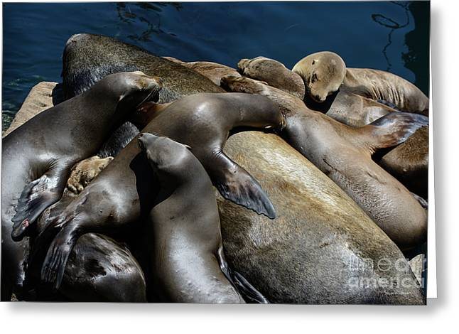 Napping Atop A Massive Sea Lion Greeting Card