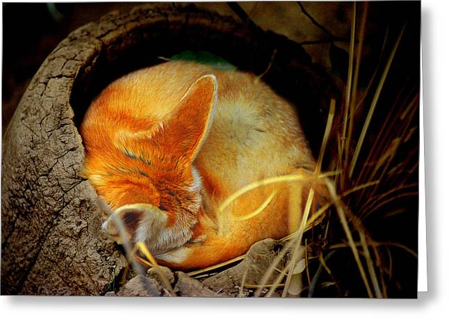 Napping Fennec Fox Greeting Card by Greg Slocum
