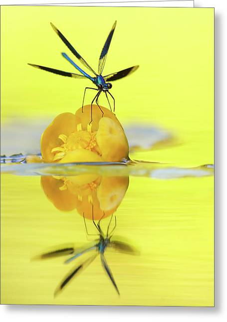 Narcissus - Damselfly Reflected In The River Greeting Card
