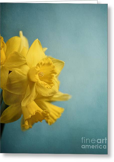 Narcissus Greeting Card by Jelena Jovanovic