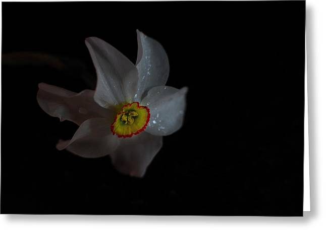 Greeting Card featuring the photograph Narcissus by Susan Capuano