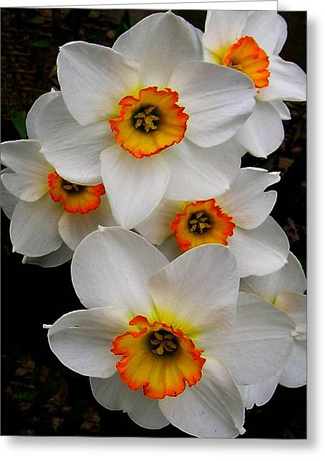 Greeting Card featuring the photograph Narcissus Tazetta by Kathleen Stephens
